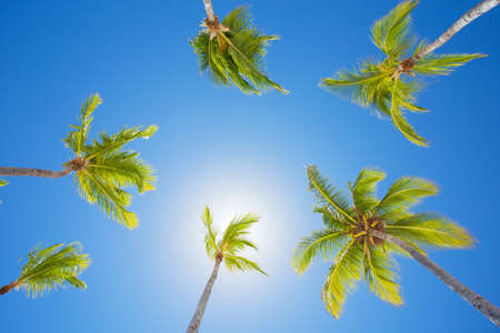 vibrancy: Palm trees on bright summer day against clear blue sky
