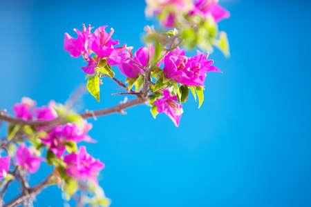 vibrancy: Tropical blossom