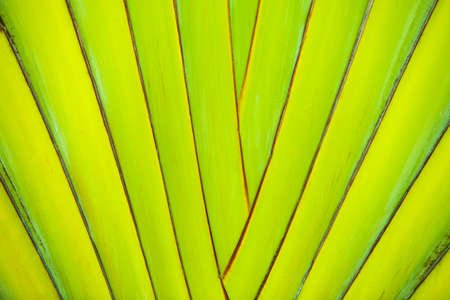 Green palm foliage background