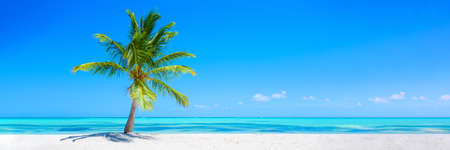 Banner of idyllic tropical beach with white sand, palm tree and turquoise blue ocean 免版税图像