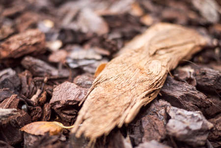 Wood chips closeup on the ground.