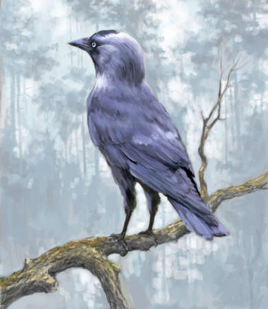 Hand-drawn Jackdaw on a branch in a forest. 写真素材