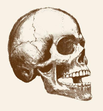 Skull of human head