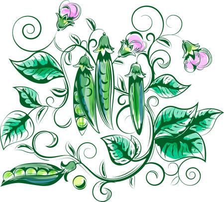Plant of peas.