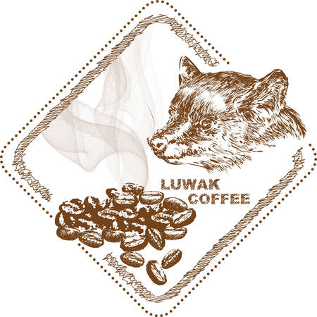The luwak coffee on white background, vector illustration.