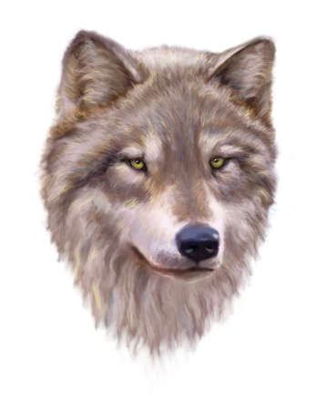 Wolf head on a white background. 写真素材