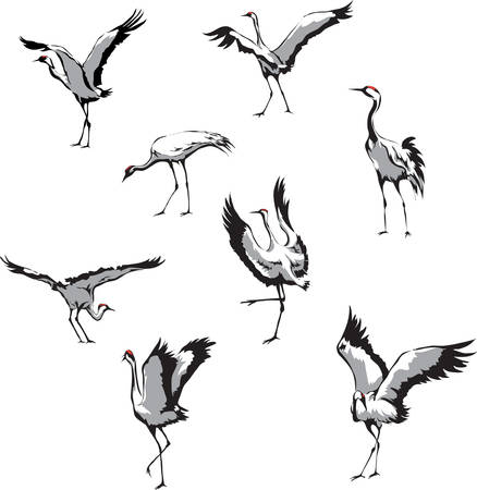 Dancing cranes on a white background. Vettoriali