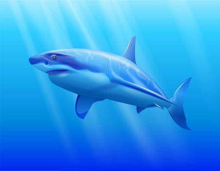 Shark in the water Vector illustration.  イラスト・ベクター素材