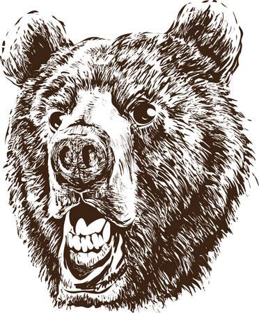 Head of a bear  イラスト・ベクター素材