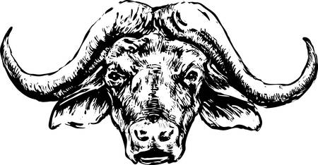 Buffalo head on a white background Stock Illustratie