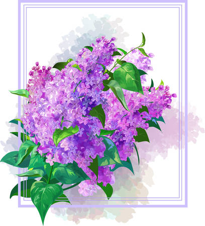 A bouquet of lilac on a white background.