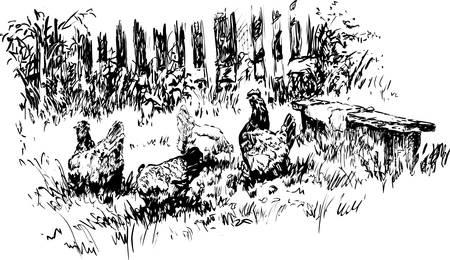 Chickens on graze