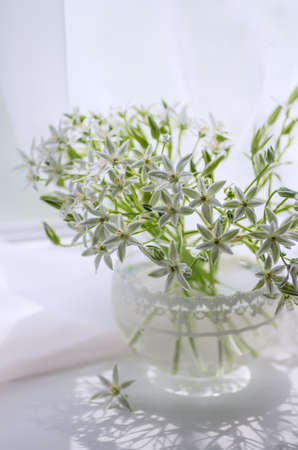 White flowers in a vase on the window. Ornithogalum.