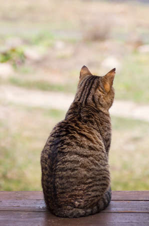 the A sad cat sits on the porch and looks thoughtfully into the distancecat sits with his back and is sad