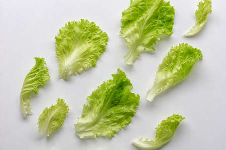 Fresh lettuce leaves on a white background. View from above. The concept of healthy eating