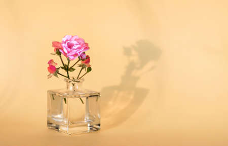 Rose flower in a glass bottle. The shadow of the flower. The concept of minimalism. Beautiful shadow.
