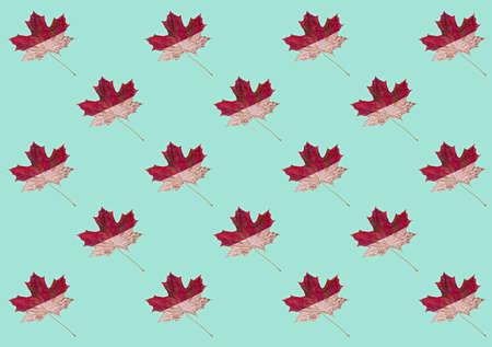 Autumn pattern with maple leaf on a mint background. Autumn minimalism, neo mint.
