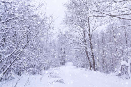 Snowstorm in park, winter landscape. winter snowy forest in the park