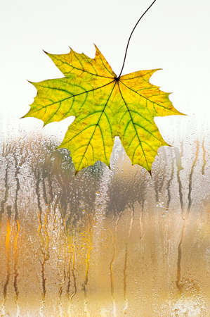 Autumn maple leaf on glass, view from the window. Copy space. Raindrops texture. The concept of bad mood.