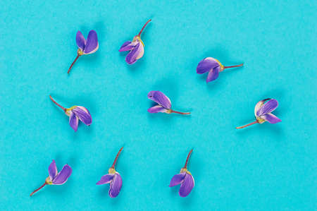 Pattern of purple lupine flowers on a blue background. Flat lay. Close up.