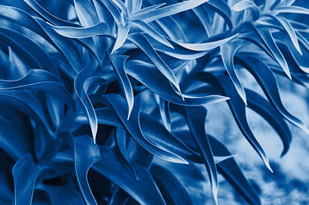 Natural background of leaves close up. Tropical leaves. Toned blue.