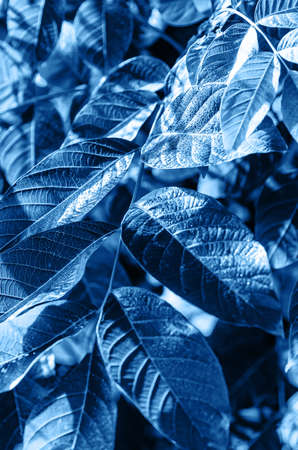 Natural background of leaves close up. Tropical leaves. Toned blue. Vertical frame. Фото со стока