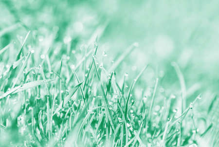Spring background toned in aqua menthe. Background, water drops on the green grass. Close up.