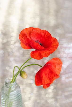 Beautiful bouquet of red poppy flowers. Blur, bokeh, selective focus. Close up.
