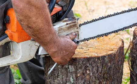The lumberjack adjusts the chainsaw for work. Hard wood working in forest. Close up.