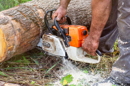 Lumberjack saws a tree with a chainsaw at a sawmill. Wood work, wood cutting tools, timber. Close up.