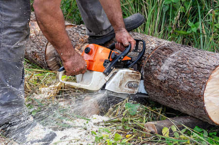 Chainsaw in motion. Hard wood working in forest. Sawdust fly around. Close up. Фото со стока