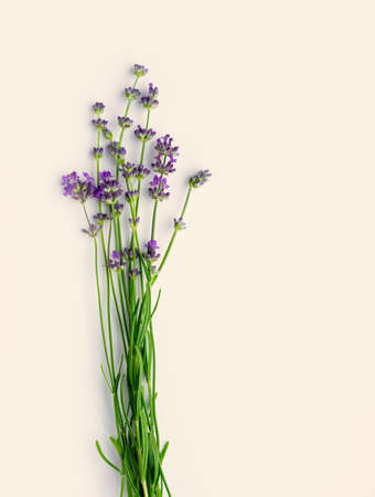 Sprigs of blooming fresh lavender on a light pastel background. Copy cpase. Flat lay. Top view. Vertical crop.