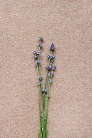 Several fresh lavender flowers on a beige felt background. Minimalistic design. Flat lay. Top view. Vertical crop.