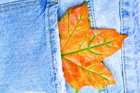 Close up maple leaf in jean pocket. Fashionable denim in autumn concept. Macro. Flat lay. Top view.