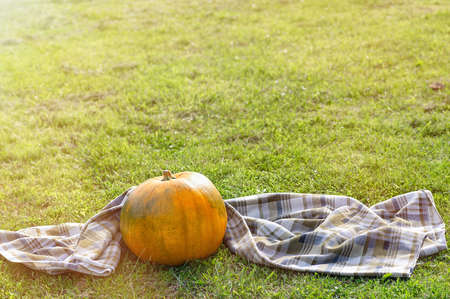A large orange pumpkin and a checkered plaid on a background of autumn grass. Autumn background. Copy space.