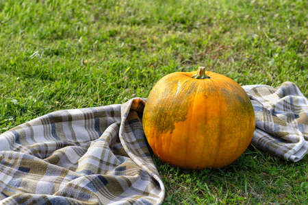 A large orange pumpkin and a checkered plaid on a background of autumn grass. Autumn background. Copy space. Close up.