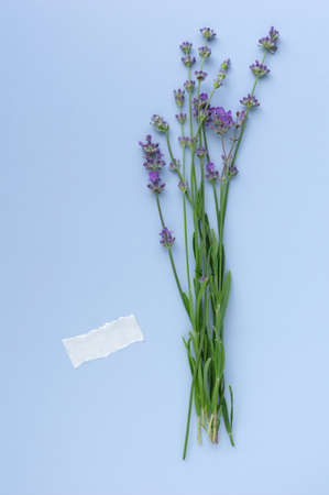 Sprigs of blooming lavender on a blue background. Empty space for text. Top view, flat lay. Minimal concept. Vertical crop.