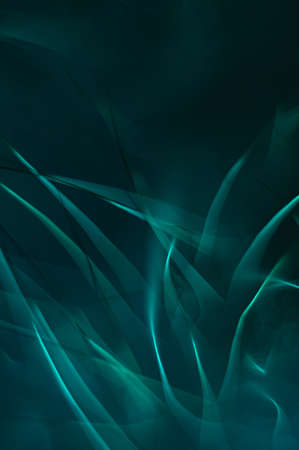 Dark green abstract design element.