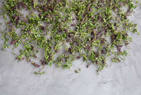 Flowers thyme collected for drying. Herbal tea thyme. Wild herb Thymus vulgaris on a gray concrete background. Flat lay. Top view. Copy space.