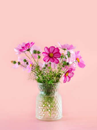 Fresh summer bouquet of pink cosmos flowers on pink background. Floral home decor. Close up. Copy space.