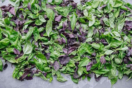 Green and purple basil leaves are prepared for drying. Selective focus. Top view. Flat lay.
