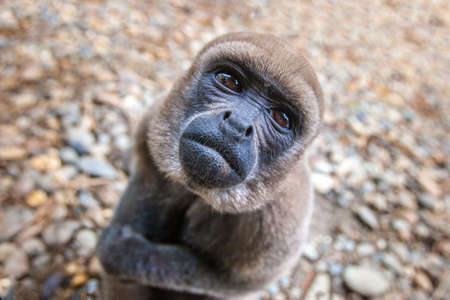 A monkey living in the jungle of the Amazon. Ecuador. The monkey looks at the top. Animals of Ecuador. Foto de archivo