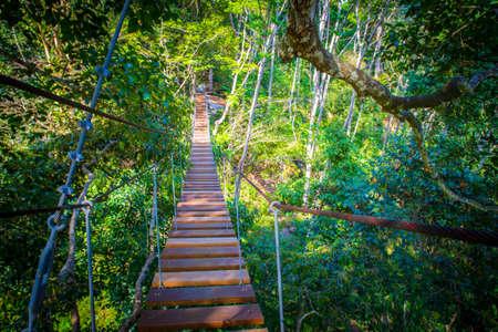 Suspension bridge in the trees. Bridge from tree to tree. cableway. Imagens