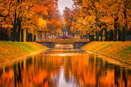 Saint Petersburg. Autumn Park. Golden leaves by the trees. Pushkin. Russia. Petersburg in the autumn. Nature of Russia.