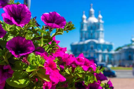 Saint Petersburg. Smolny Cathedral. Russia. Sunny day .. Summer in St. Petersburg. City of Russia. Petersburg in colors. Archivio Fotografico