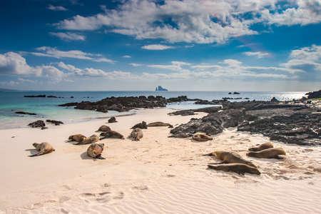 Galapagos. Ecuador. Sea lion. Galapagos sea lions. Seals lie on the ocean, basking in the sun. Pacific ocean. Animals of the Galapagos Islands. Ecuadorian beaches.