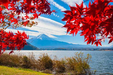 Japan in autumn. Yamanashi Prefecture. Lake Kawaguchiko and mount Fuji. The leaves of Japanese maples and mount Fuji. Kawaguchiko lake on the background of autumn trees. Autumn trip to East Asia.
