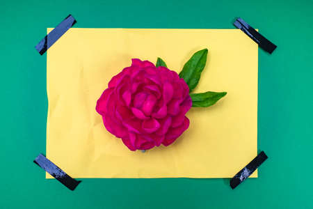 Bright greeting card with a flower. A maroon peony lies on yellow paper. Greeting card with a flower and tape. Design. Unusual greeting card. 스톡 콘텐츠
