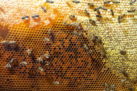 Honeycomb with bees. Bee products. Sale of natural honey. The collection of honey. Background of worker bees on the honeycells.