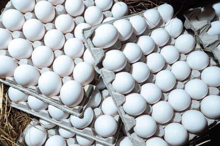 Chicken eggs in trays. White eggs in paper trays. Group of fresh eggs in containers. Sale of farm products. Eco-friendly packaging.